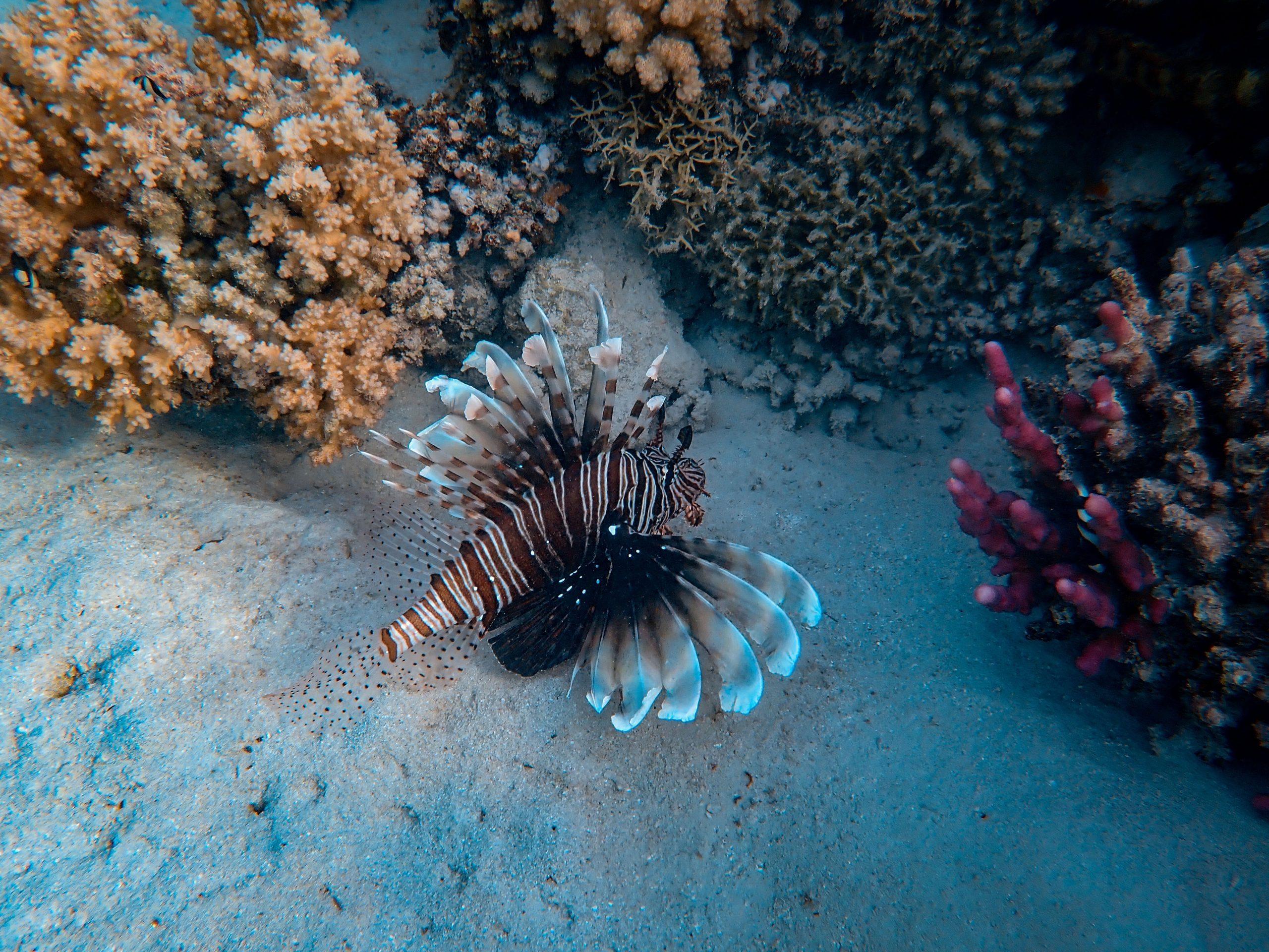 Saving Coral Life